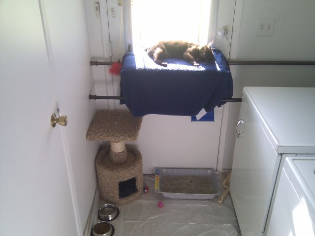 [Snapshot: the kitty apartment is approved]