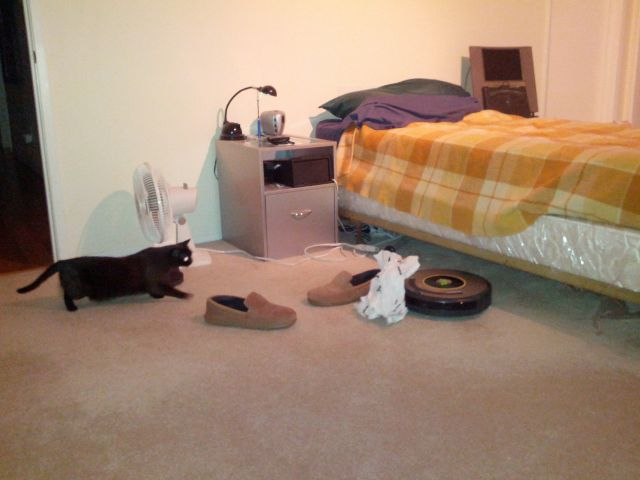[Snapshot: Iris the cat versus Roomba the robot]